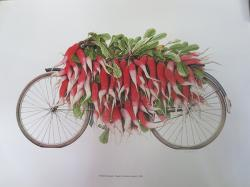 Radish Transport Nepal by Robert Powell, 1990