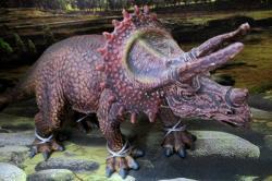 Stimulation Model Dinosaur - (HH-062)