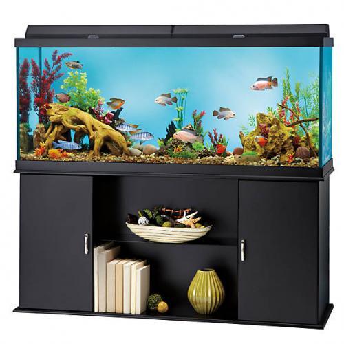 Readymade Aquarium