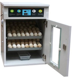 Eggs incubator challa koralne machine