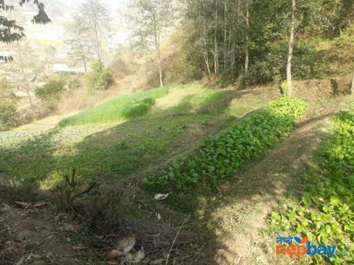 land avaiable for sale