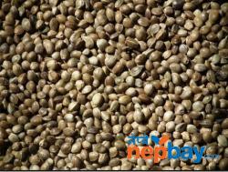 Bhango (Hemp) Seeds
